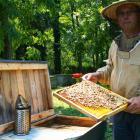 Skapér Zoltán méhész